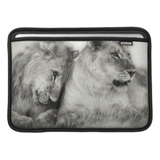 Lioness and son sitting and nuzzlingin Botswana Sleeve For MacBook Air