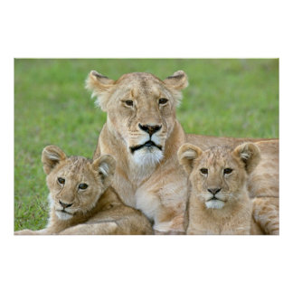 Lioness and Two Cubs, East Africa, Tanzania, Poster
