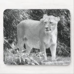 Lioness (black & white) mouse pad