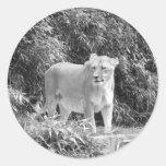 Lioness (black & white) round sticker