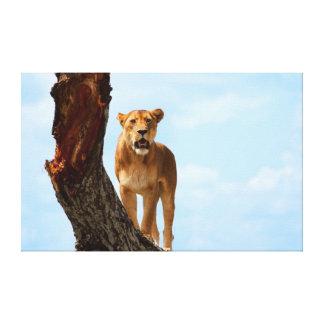 Lioness Canvas Prints