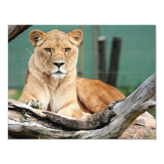 Lioness Card