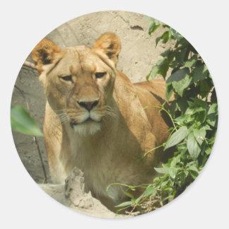 Lioness Classic Round Sticker
