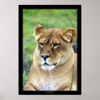 Lioness (Color Version) Print