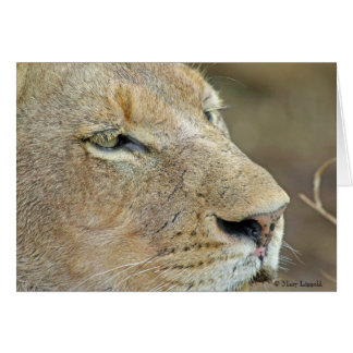 Lioness Face Card