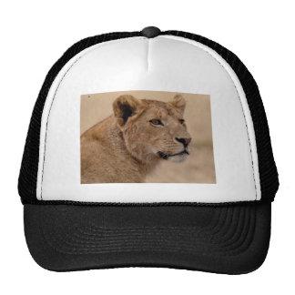Lioness head closeup trucker hat