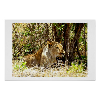 LIONESS IN KENYA AFRICA POSTER