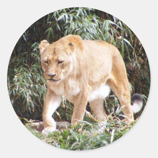 Lioness in Spring Round Stickers