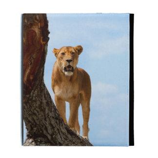 Lioness iPad Folio Cases