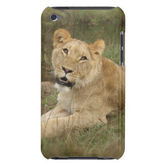 Lioness  iTouch Case iPod Touch Cases