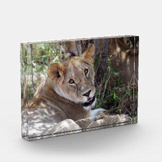 lioness love acrylic award