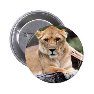 Lioness Luring Stare Button