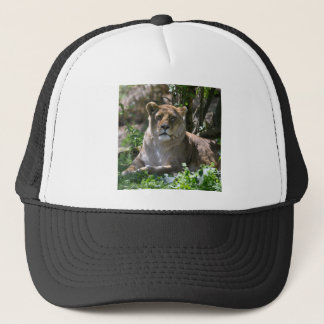 Lioness lying in grass trucker hat