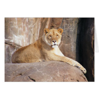 Lioness on the Rocks Card