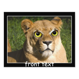 "Lioness on Watch 4.25"" X 5.5"" Invitation Card"
