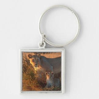 Lioness (Panthera Leo) And Cub Keychain