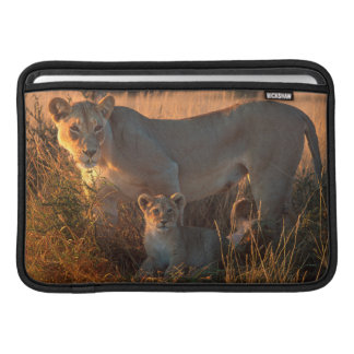 Lioness (Panthera Leo) And Cub MacBook Air Sleeve