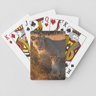Lioness (Panthera Leo) And Cub Playing Cards