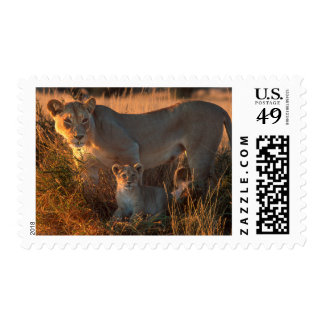 Lioness (Panthera Leo) And Cub Postage Stamp