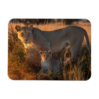 Lioness (Panthera Leo) And Cub Rectangular Photo Magnet