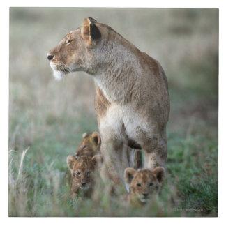 Lioness (Panthera leo) and cubs, Masai Mara Large Square Tile