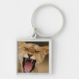 Lioness (Panthera Leo) Growling With Cub Keychain