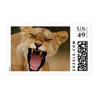 Lioness (Panthera Leo) Growling With Cub Postage