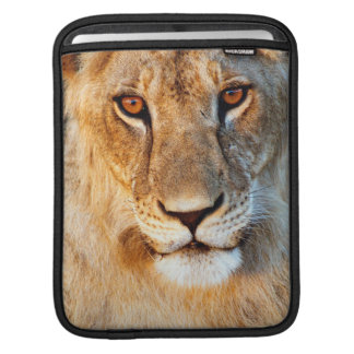 Lioness (Panthera Leo) Portrait. Tarangire Sleeve For iPads