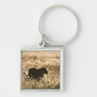 Lioness (Panthera leo) silhouetted in long grass Keychain