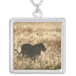 Lioness (Panthera leo) silhouetted in long grass Square Pendant Necklace
