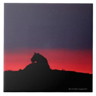 Lioness (Panthera leo) sitting, at sunset, Masai Large Square Tile
