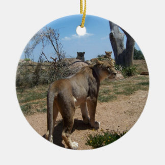 Lioness Patroling Her Turf Ornaments