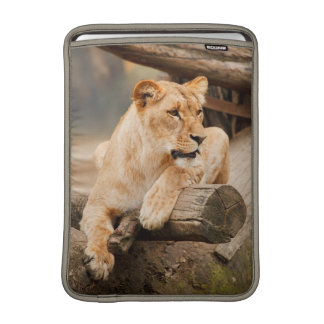 Lioness Photo Macbook Sleeve