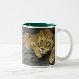 Lioness Photo Mug