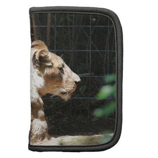 Lioness Folio Planner