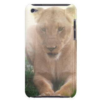 Lioness Profile iTouch Case Case-Mate iPod Touch Case