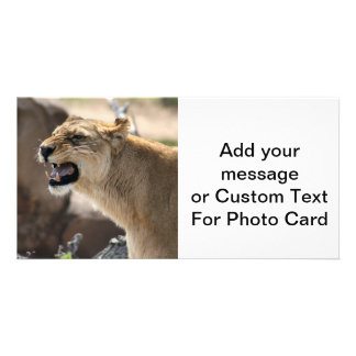 Lioness - Queen of the Jungle Photo Card