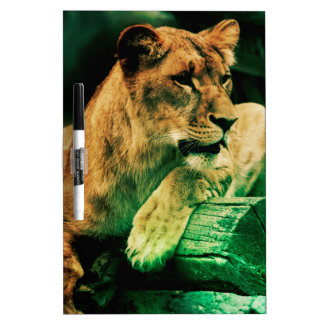 Lioness resting on a tree trunk dry erase whiteboards