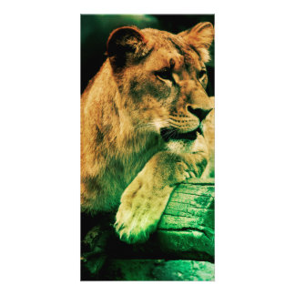 Lioness resting on a tree trunk personalized photo card
