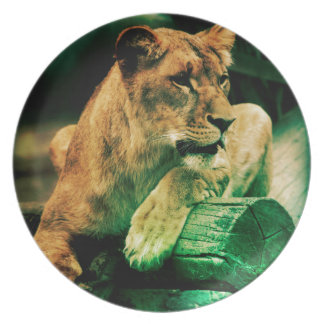 Lioness resting on a tree trunk party plates