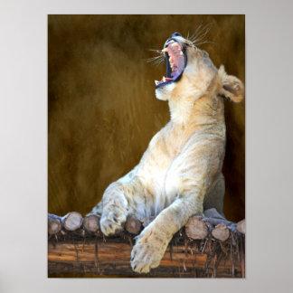 Lioness Roar or Yawn Photo Portrait Poster