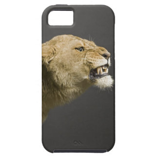 Lioness roaring 2 iPhone SE/5/5s case