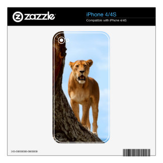 Lioness Skins For iPhone 4