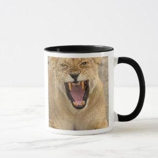 Lioness Snarl B, East Africa, Tanzania, Mug