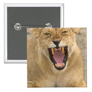 Lioness Snarl B, East Africa, Tanzania, Pinback Button