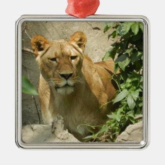Lioness Square Metal Christmas Ornament