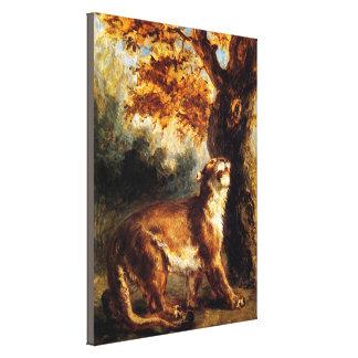Lioness Stalking Her Canvas Print