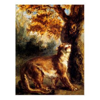 Lioness Stalking Her Postcard