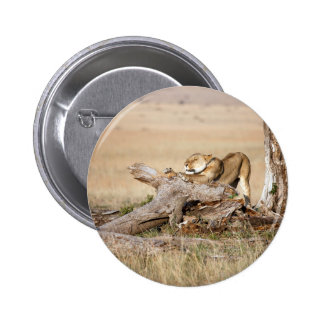 Lioness stretching button