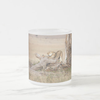 Lioness stretching 10 oz frosted glass coffee mug